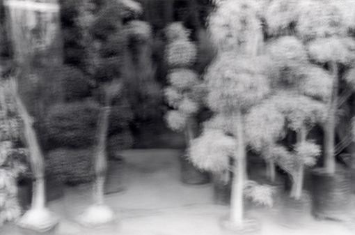jardinswaawfiche.jpg